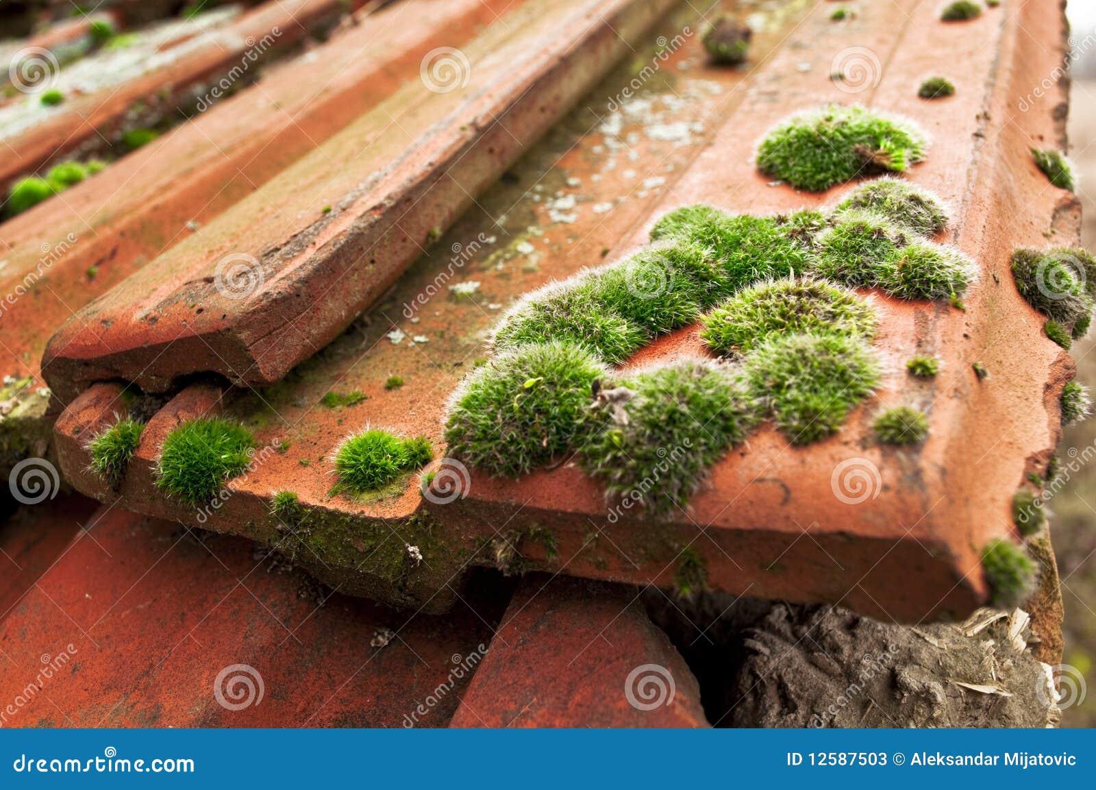 mousse sur des tuiles de toit image stock image du detail bois 12587503. Black Bedroom Furniture Sets. Home Design Ideas