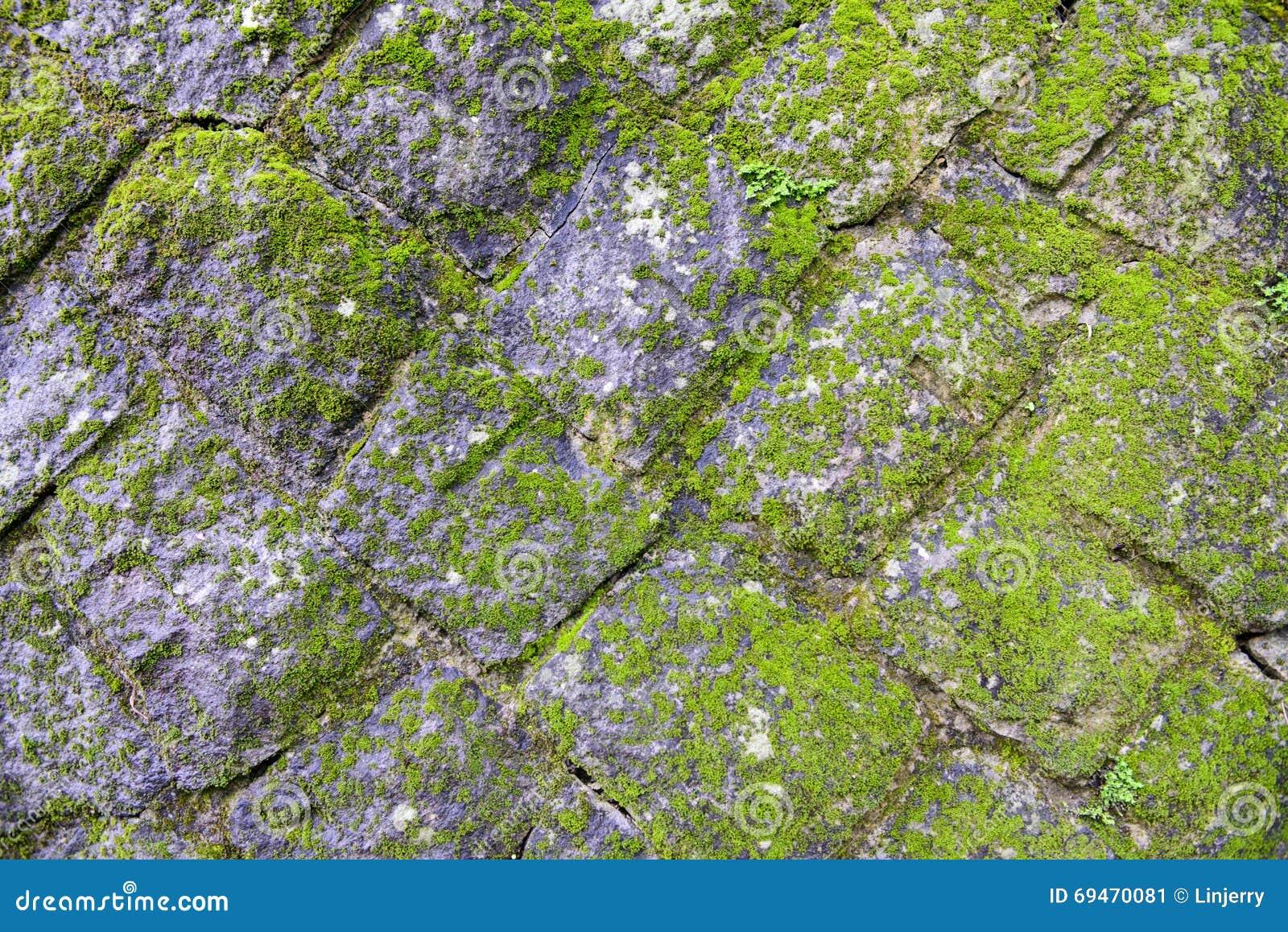 mousse sur le vieux mur de roche photo stock image 69470081. Black Bedroom Furniture Sets. Home Design Ideas