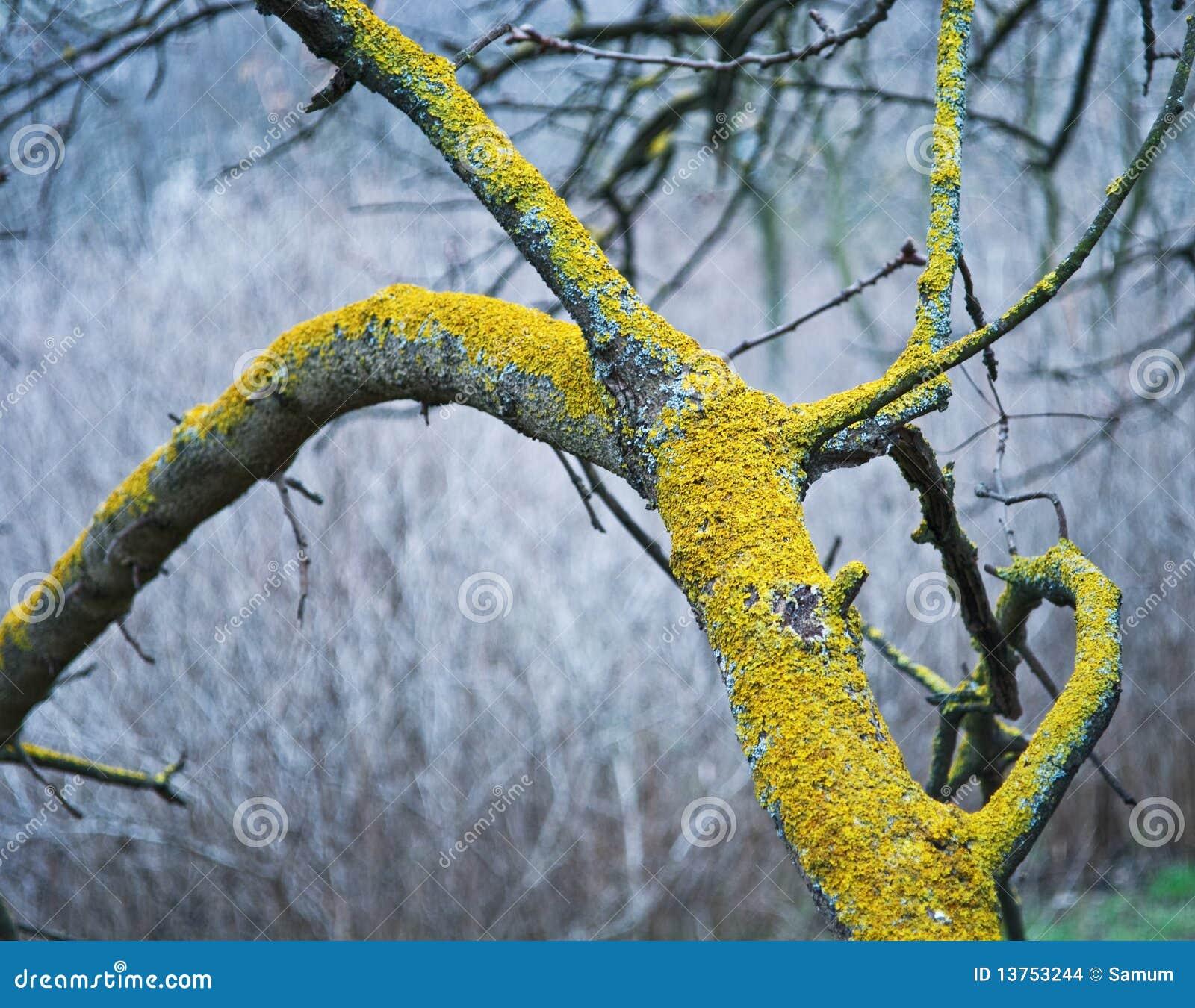 Mousse sur un arbre photo stock image du fissure - Mousse sur les arbres ...