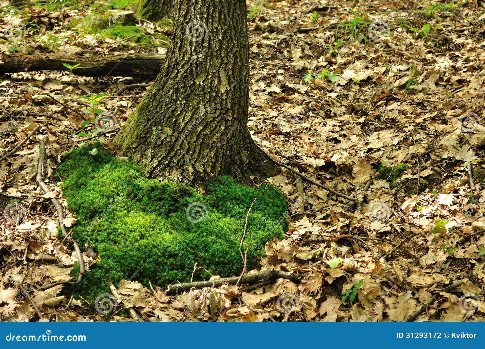Mousse verte au tronc d 39 arbre photographie stock image - Mousse sur les arbres ...