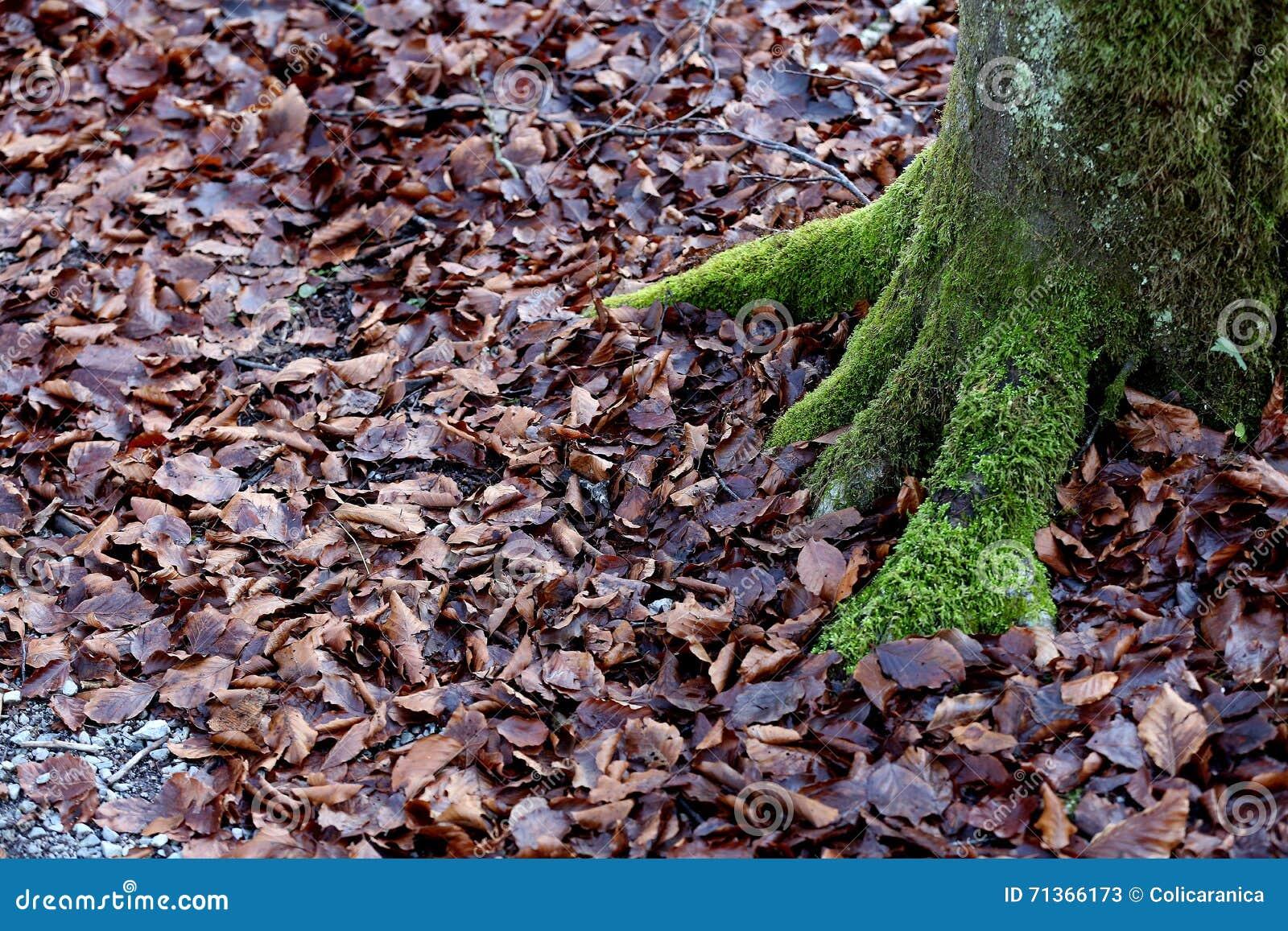 Mousse verte dans les bois photo stock image 71366173 - Mousse dans les urines ...