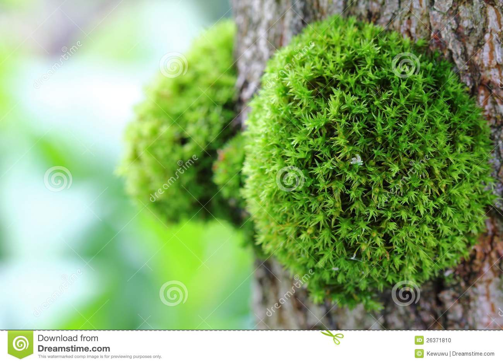 Mousse verte sur l 39 arbre photo stock image 26371810 - Mousse sur les arbres ...