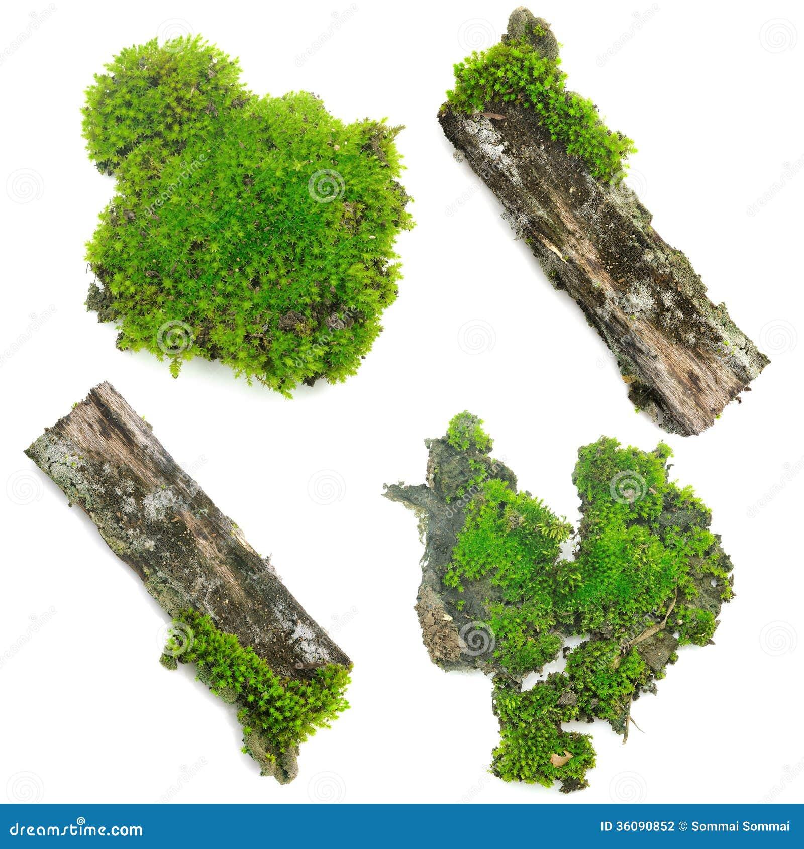 mousse verte sur le fond blanc photo stock image du herbe nature 36090852. Black Bedroom Furniture Sets. Home Design Ideas