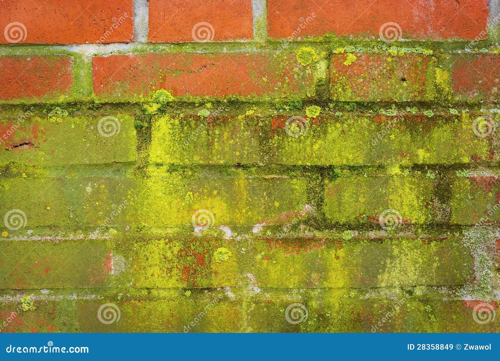mousse verte sur un mur rouge images libres de droits image 28358849. Black Bedroom Furniture Sets. Home Design Ideas
