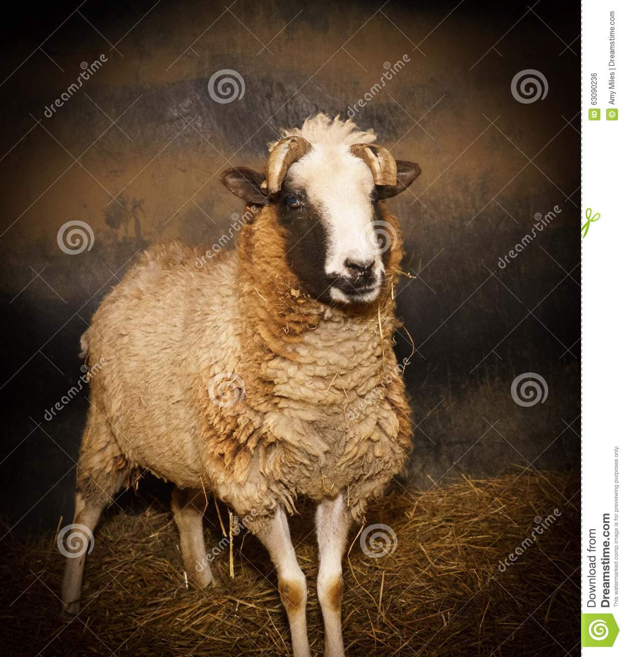 Download Moutons photo stock. Image du bronzage, foin, jaune, avec - 63090236