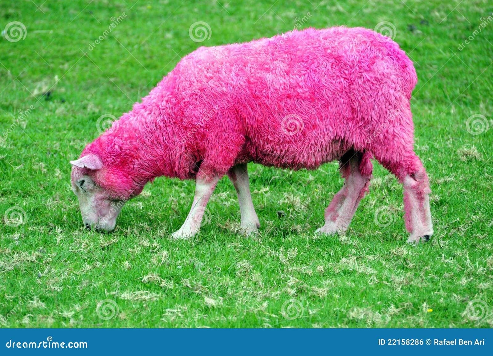 Moutons roses image libre de droits image 22158286 - Photos de moutons gratuites ...