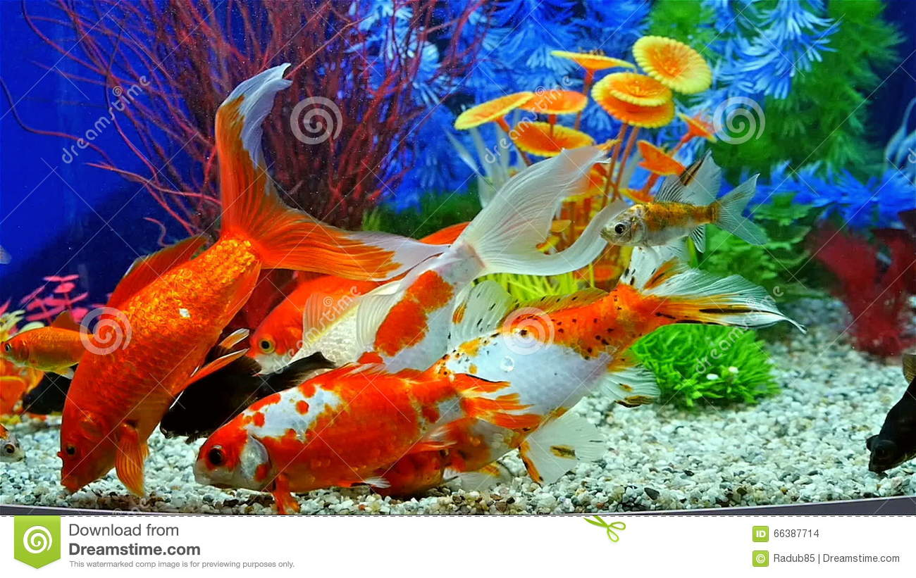 Luxus aquarium pour poisson rouge id es de conception de for L alimentation du poisson rouge
