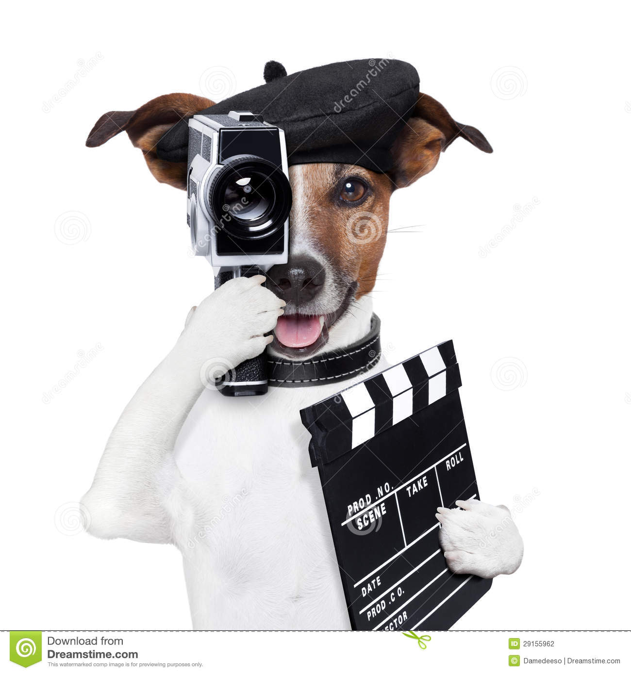 Movie Director Dog Stock Photography - Image: 29155962