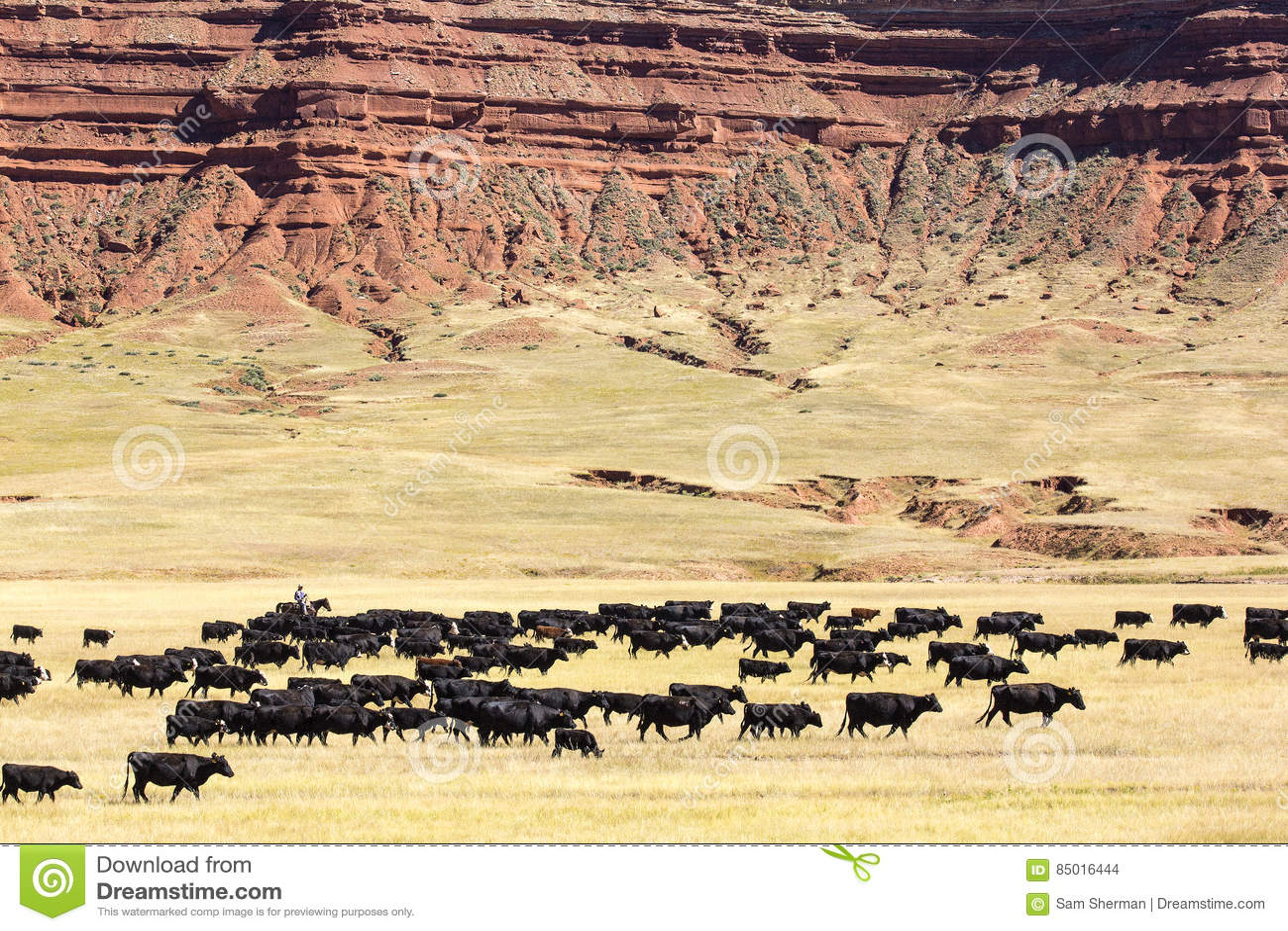 Movimentação do gado