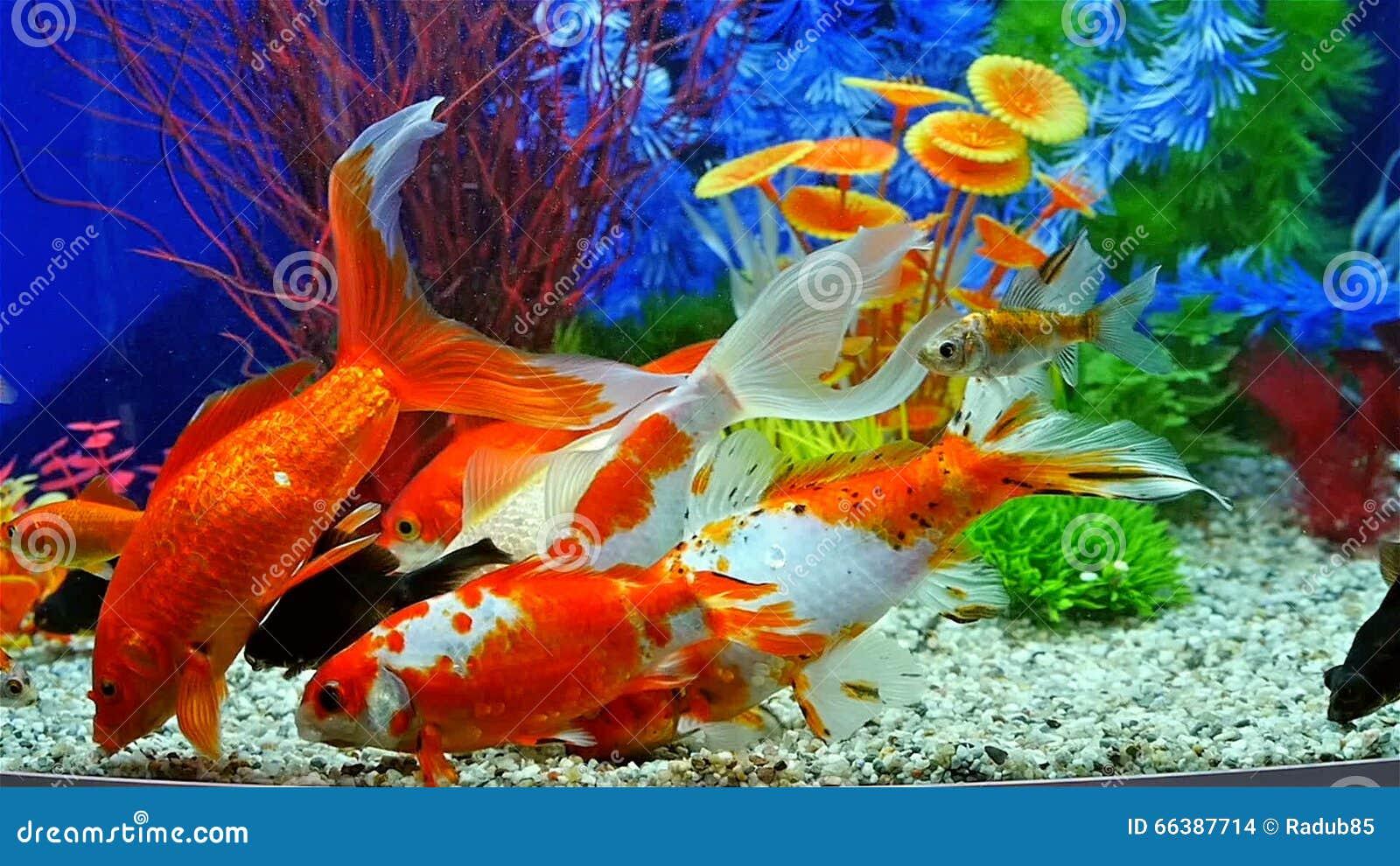 Acquario in movimento casamia idea di immagine for Pesci tropicali acqua dolce
