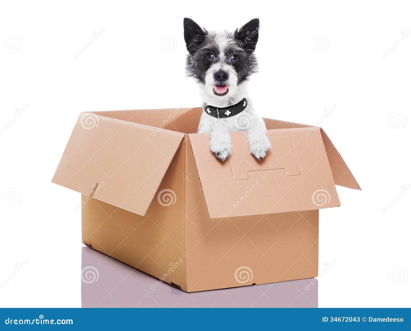 Moving Box Dog Stock Photos Image 34672043