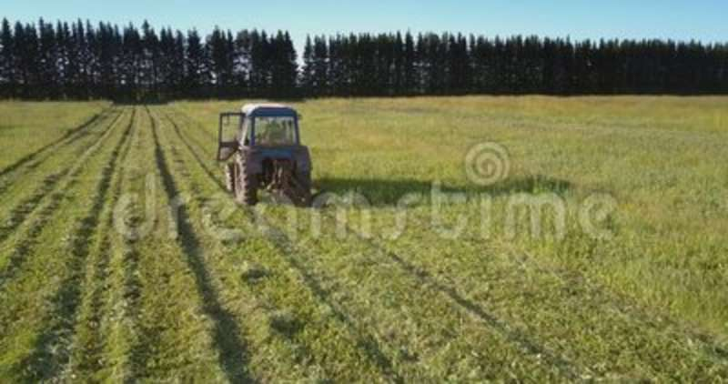 Mowing machine cuts off green grass against high trees. Drone follows mowing machine driving along field and cutting off green grass against high trees stock footage