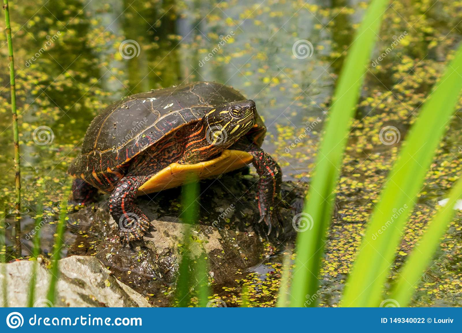 Mr Turtle Home At Montreal Botanical Garden Stock Photo Image Of Peace Stone 149340022