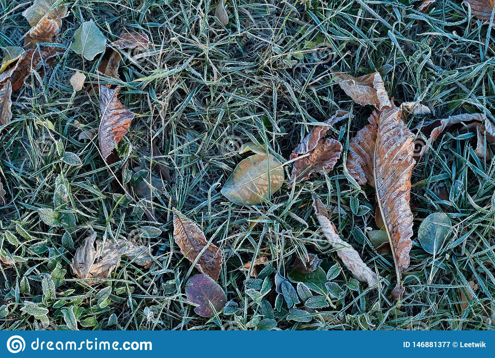 Mr?z na trawie i suszy li?cie