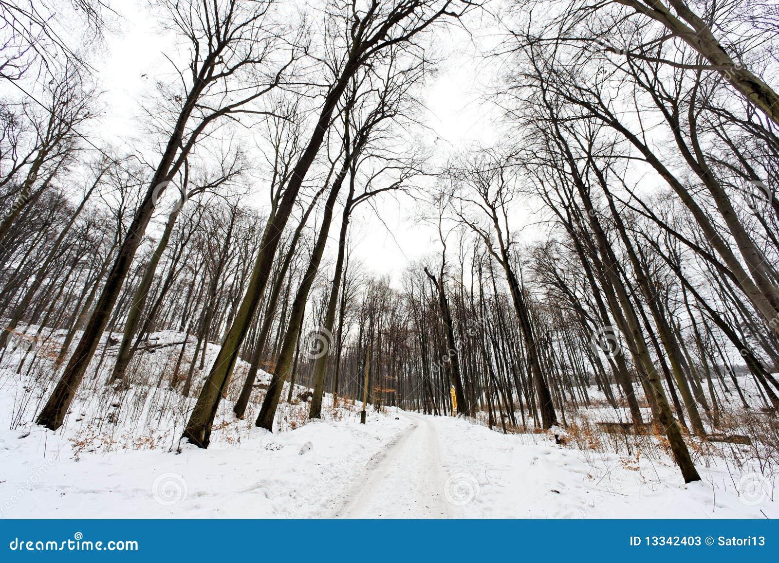 Mroźny krajobrazowy Poland