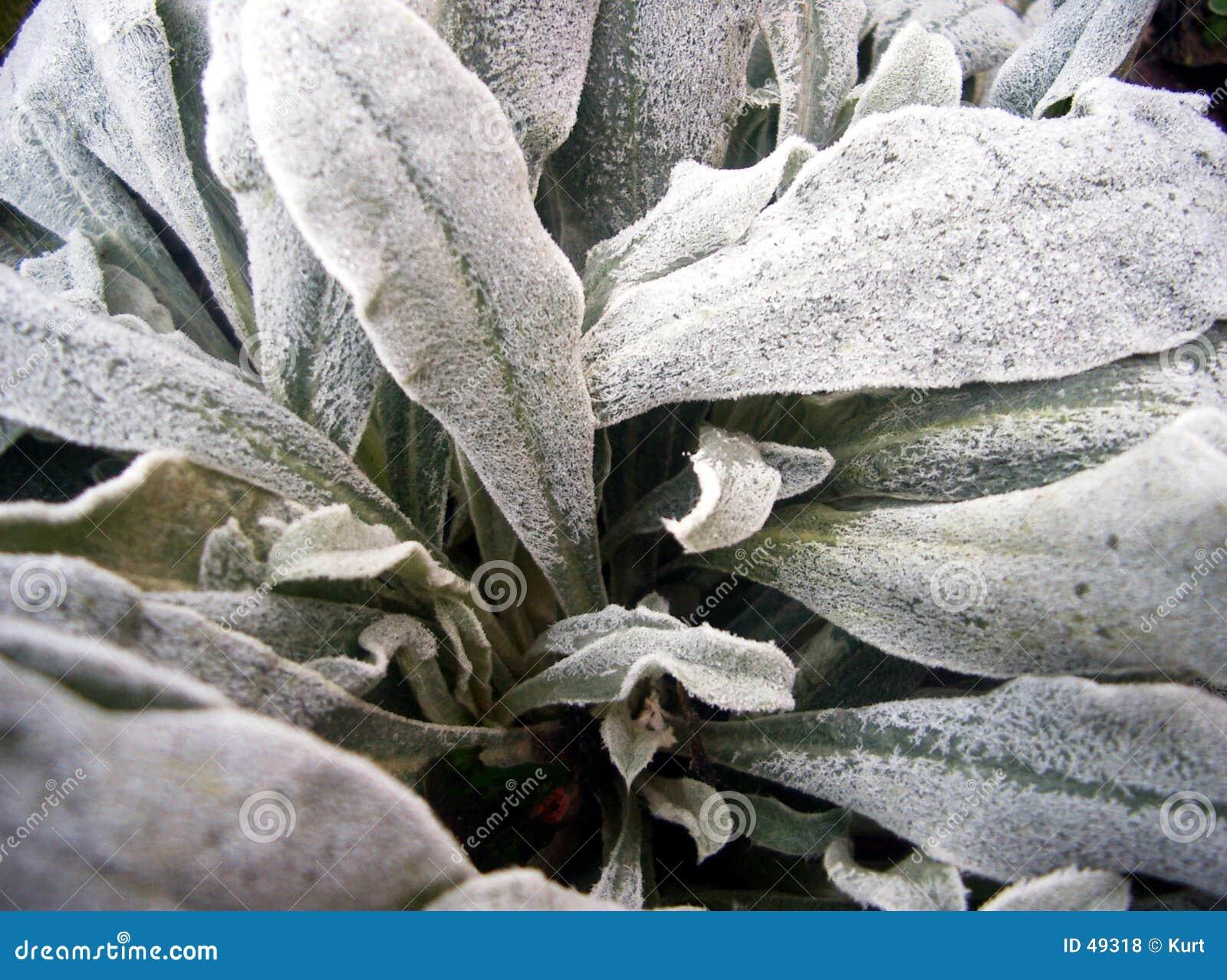 Mrożona roślinnych
