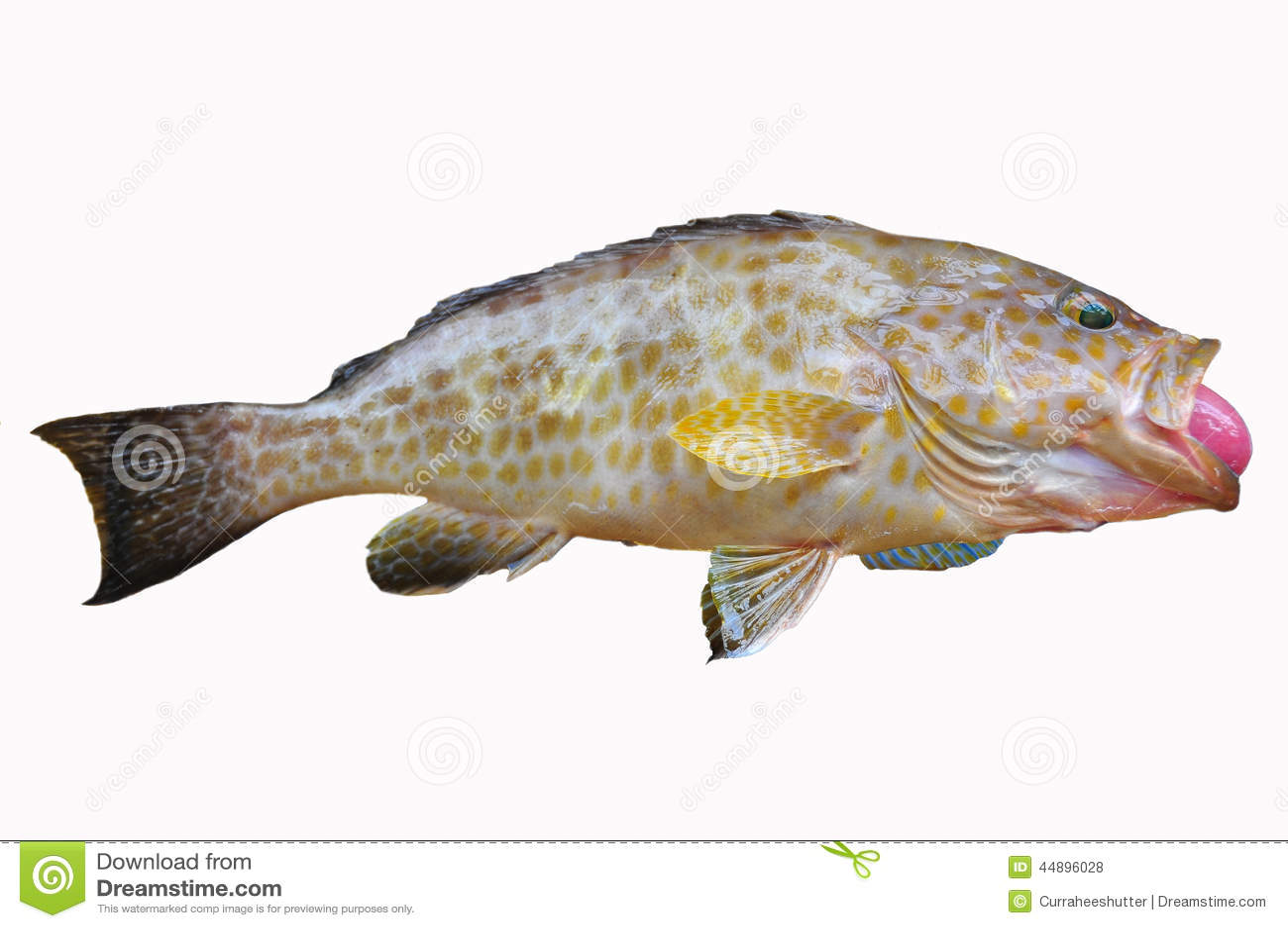 M rou frais sur le fond blanc filet des poissons for Nourriture a poisson