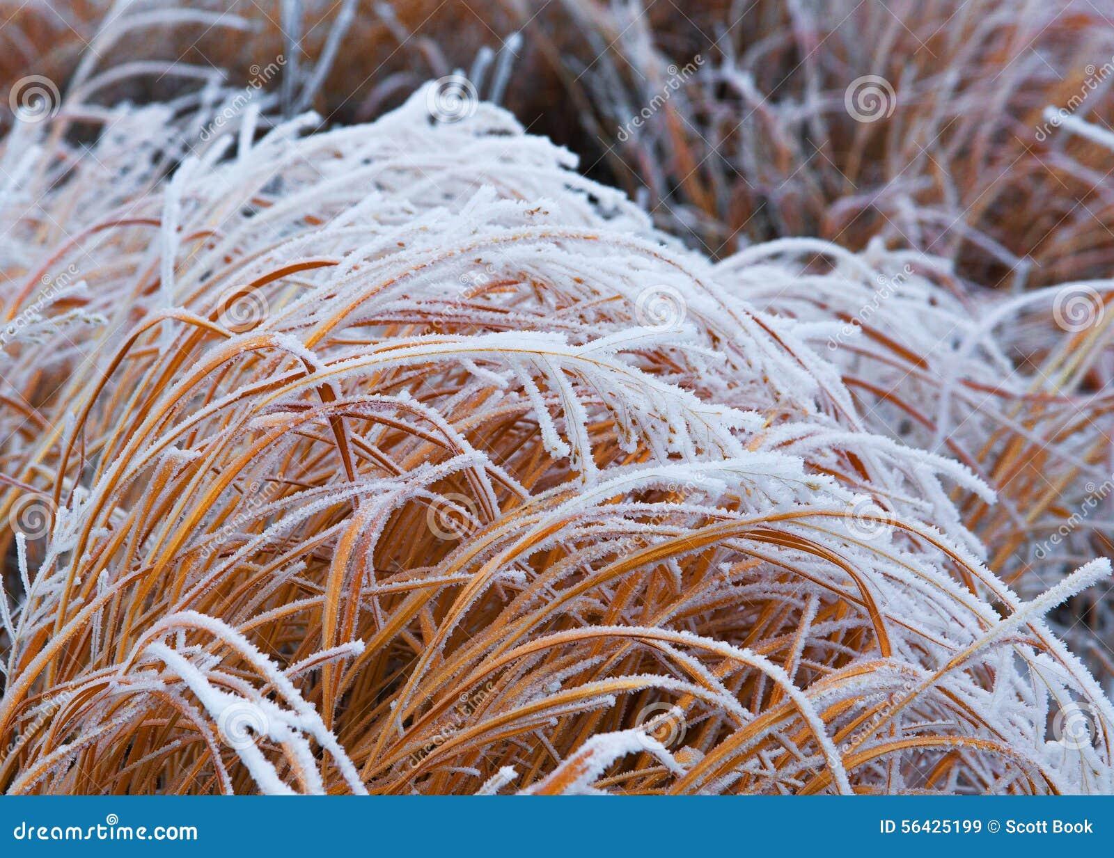 Mrozowa wymienionego trawy