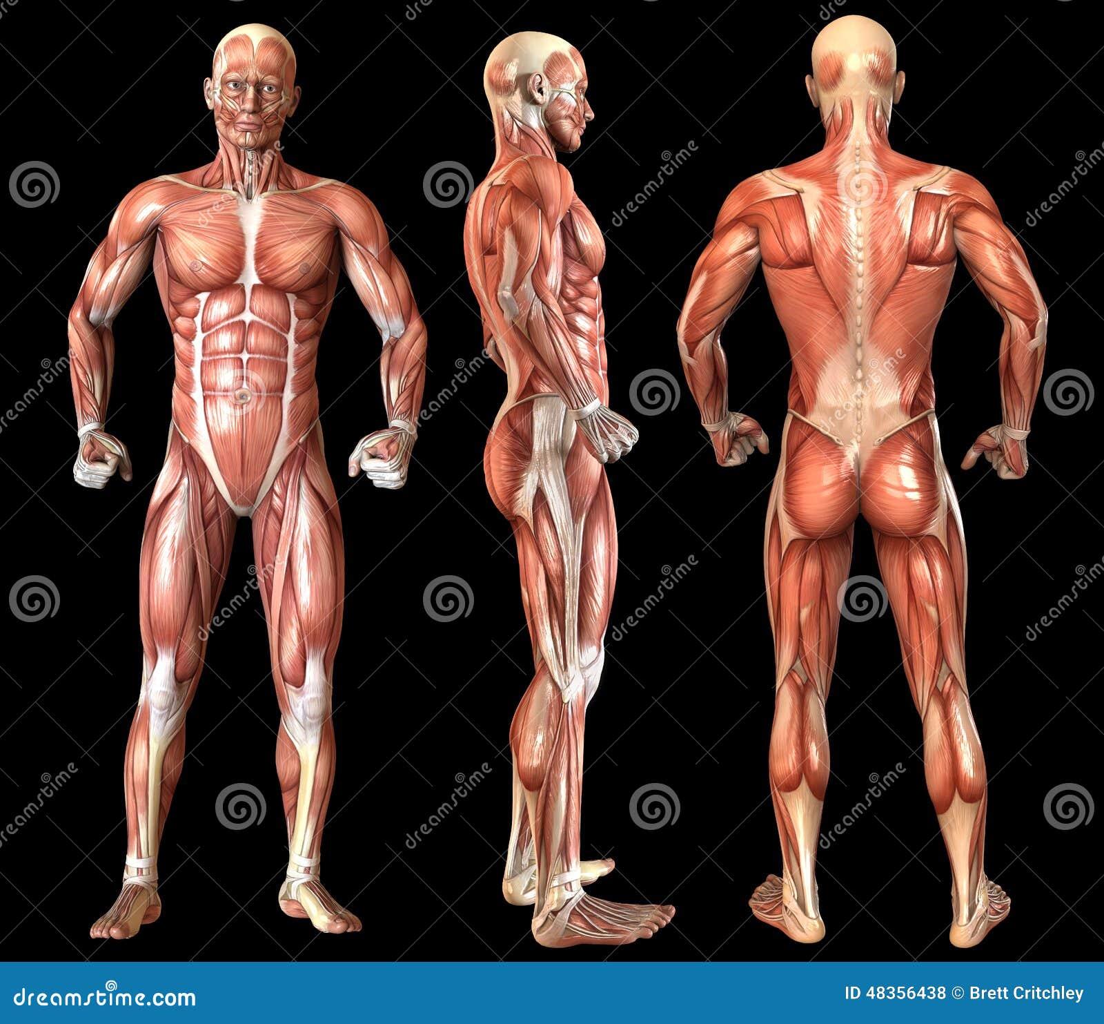 Fantástico Anatomía De Una Escalera Imágenes - Anatomía de Las ...