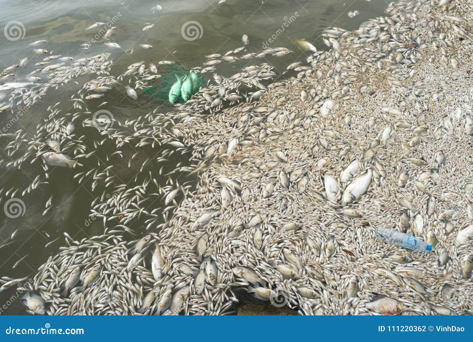Mszalna śmierć rybi unosić się na zanieczyszczającej jezioro wodzie