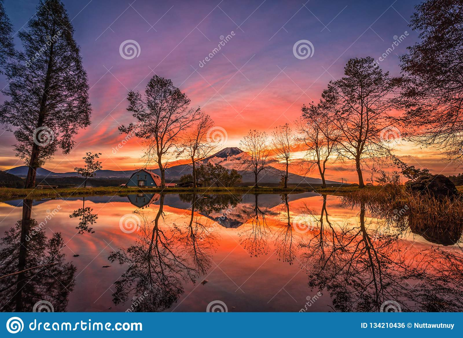 Mt 与大树和湖的富士日出的在富士宫,日本