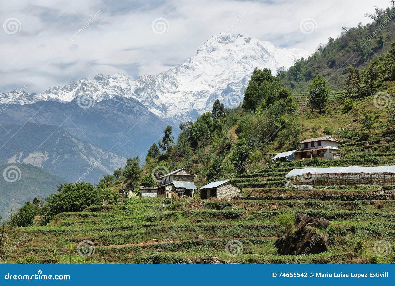 Mt Annapurna południe w Nepal