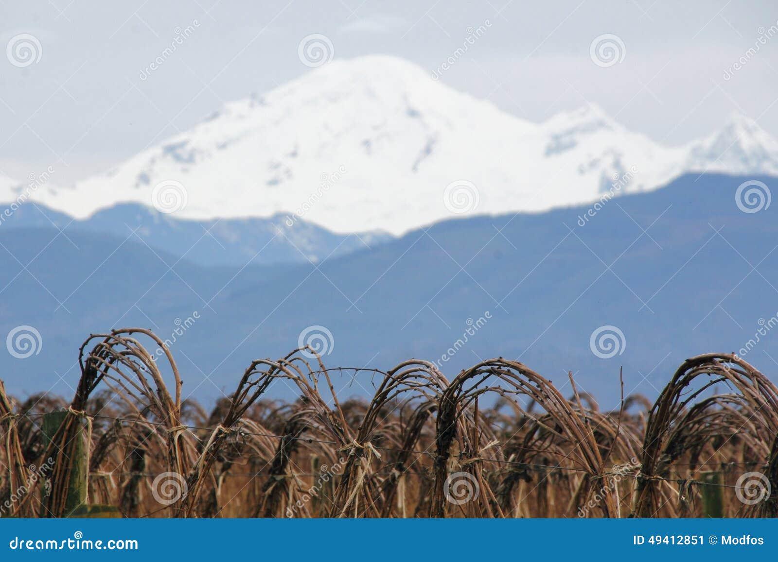 Download Mt Bäcker-und Winter-Himbeeren Stockbild - Bild von frucht, zustände: 49412851