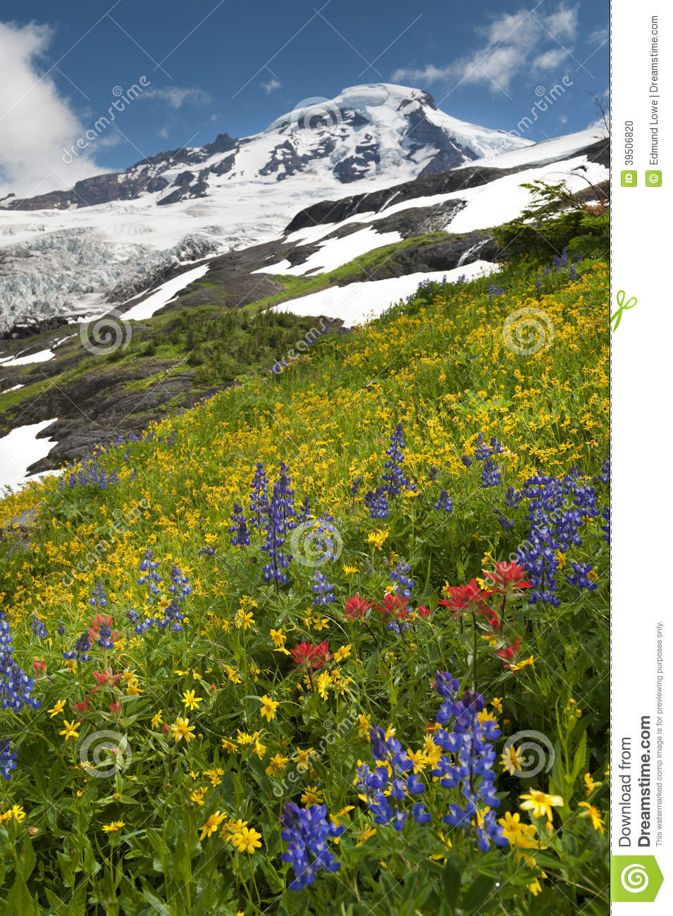 Mt. Baker Wildflowers