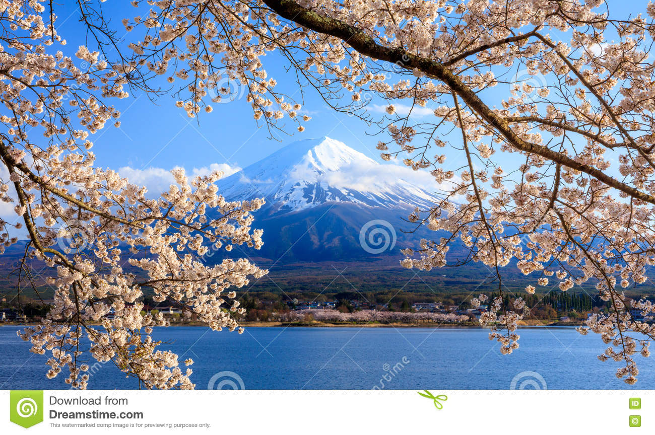 Mt. Fuji And Cherry Blossom At Lake Kawaguchiko, Japan ...