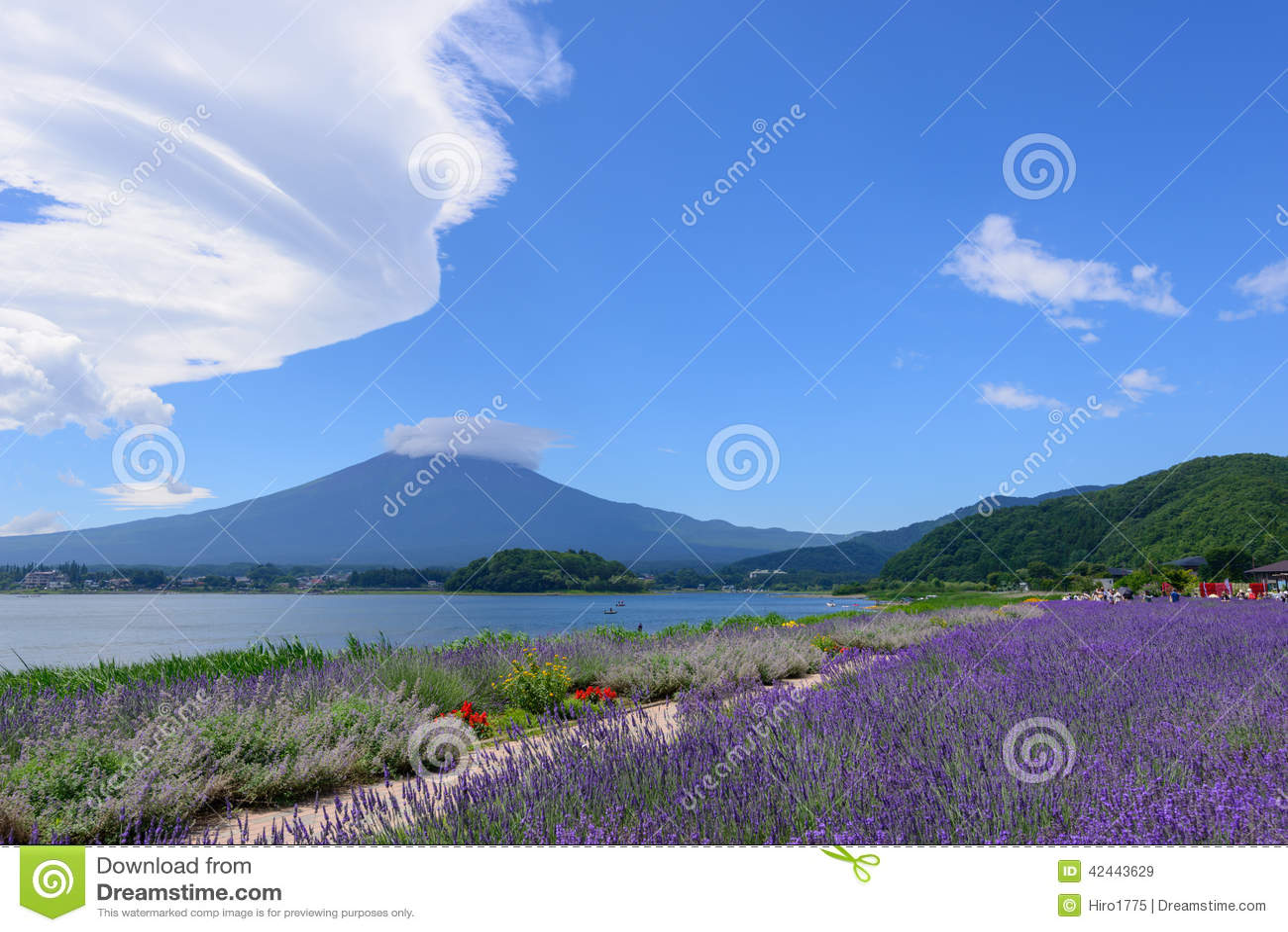 Mt Fuji y lavanda en la orilla del lago de Kawaguchi