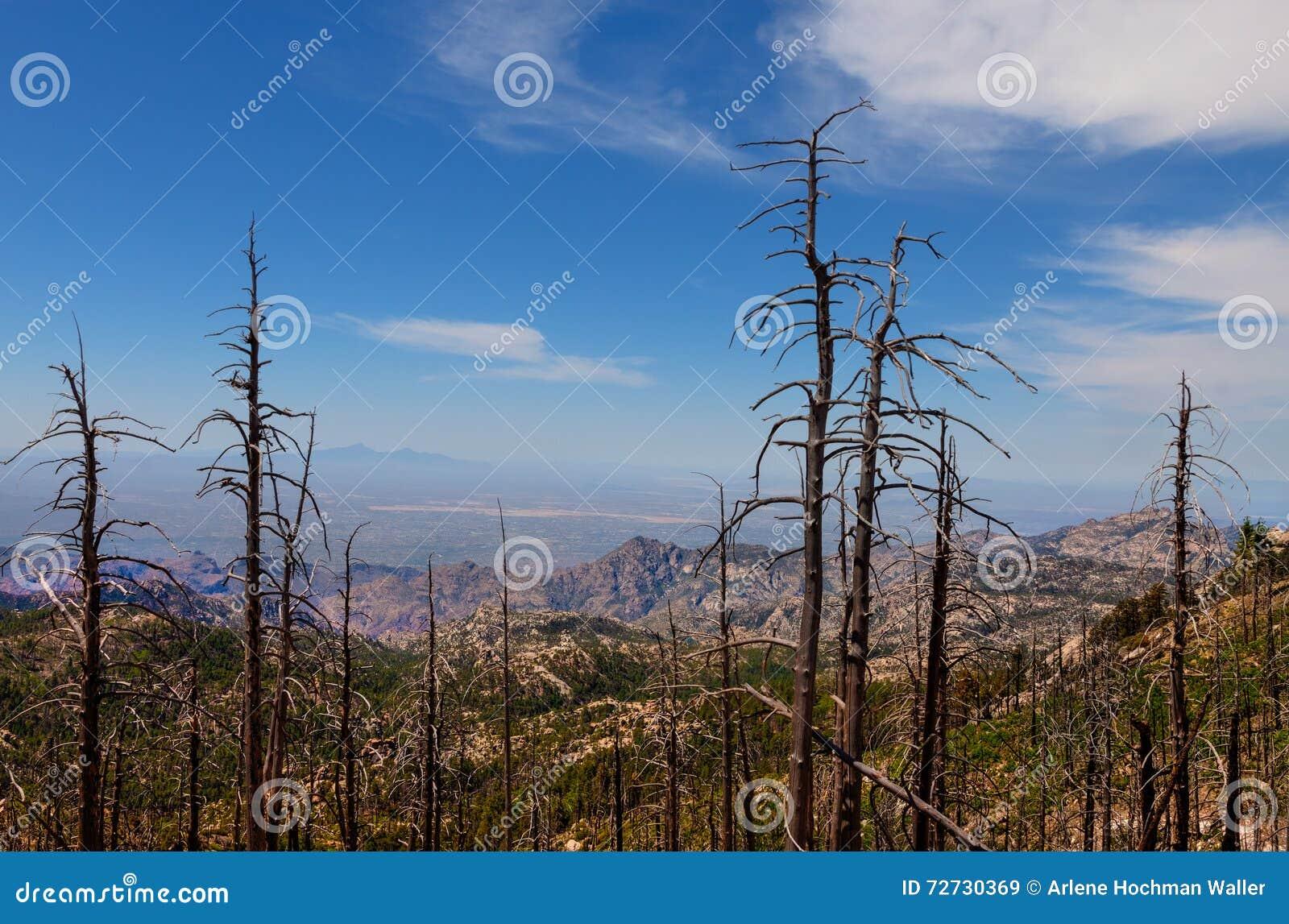 MT Lemmongebied, dichtbij Tucson, Arizona Coronado nationaal bos