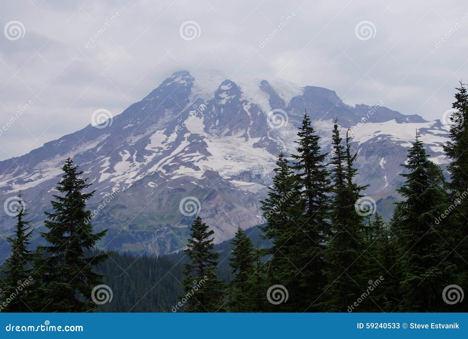 Download Mt Más Lluvioso, Con El Bosque De La Conífera Imagen de archivo - Imagen de pino, conífera: 59240533