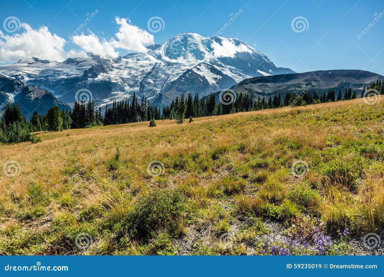 Mt Rainier Landscape