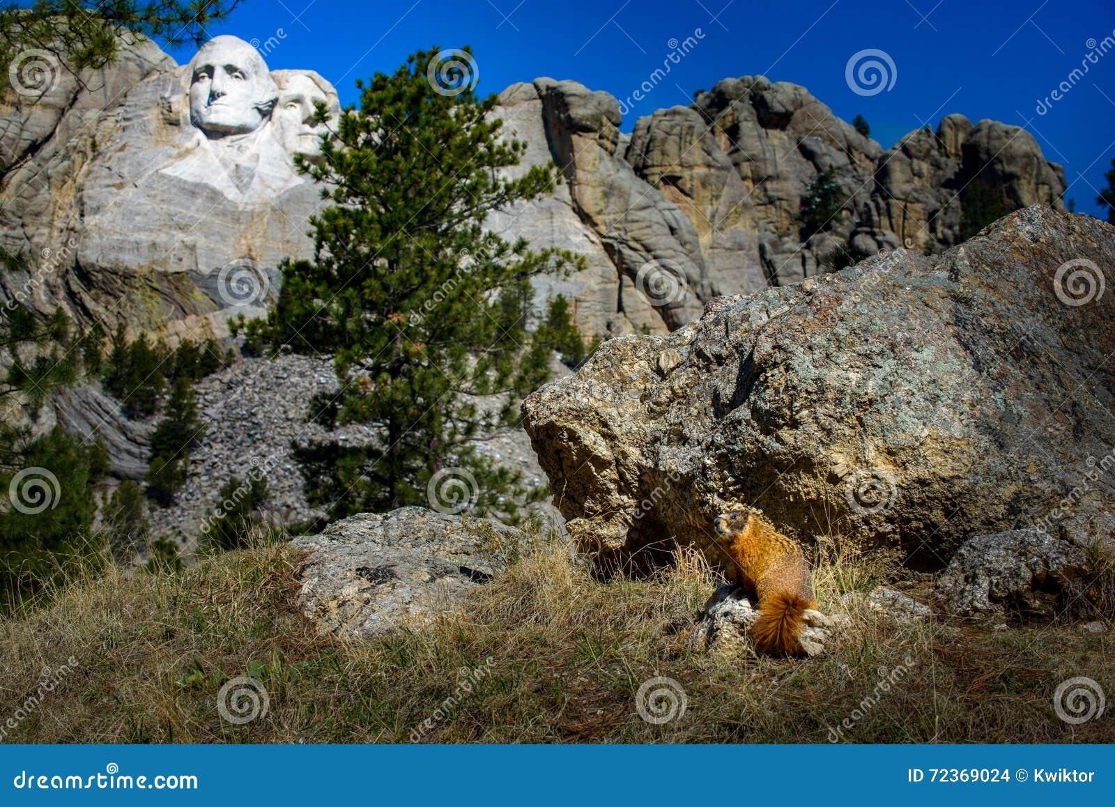 Mt Rushmore土拨鼠