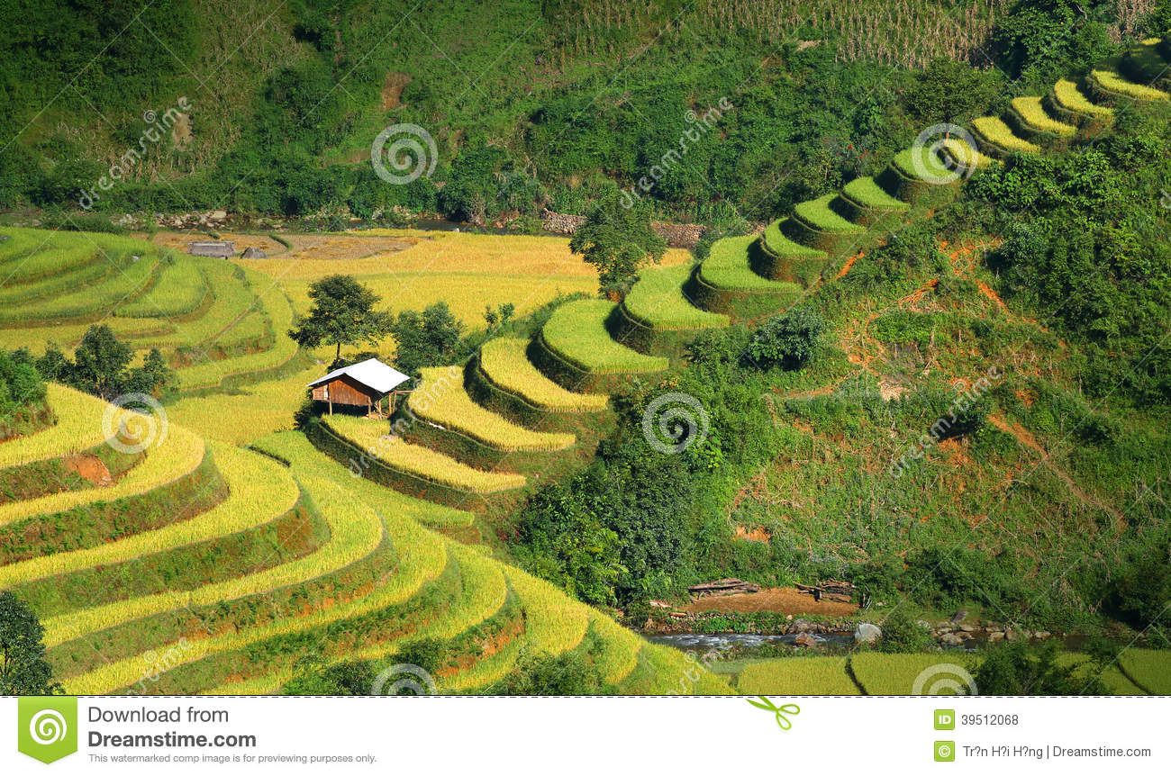 Mu Cang Chai terraces 06