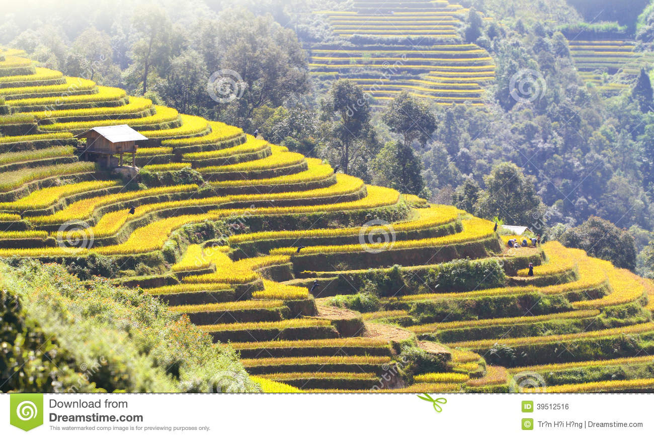 Mu Cang Chai terraces 08