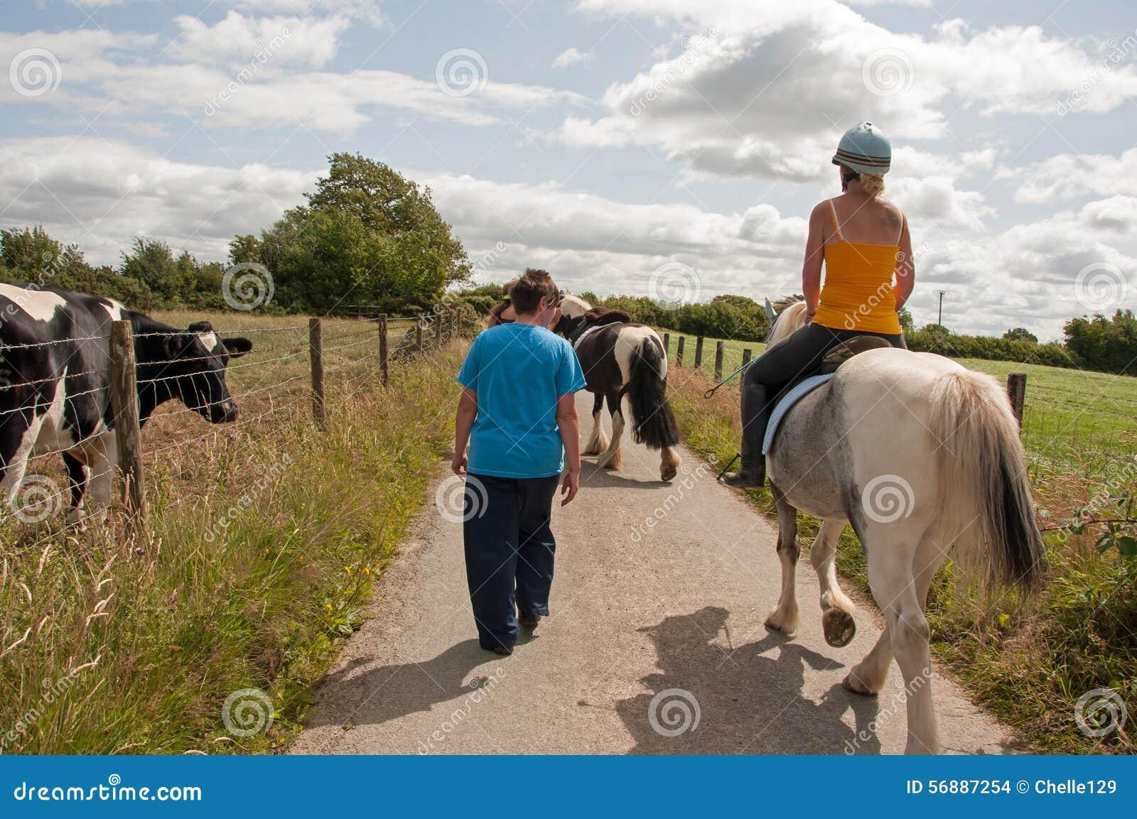 Mucche & cavalli