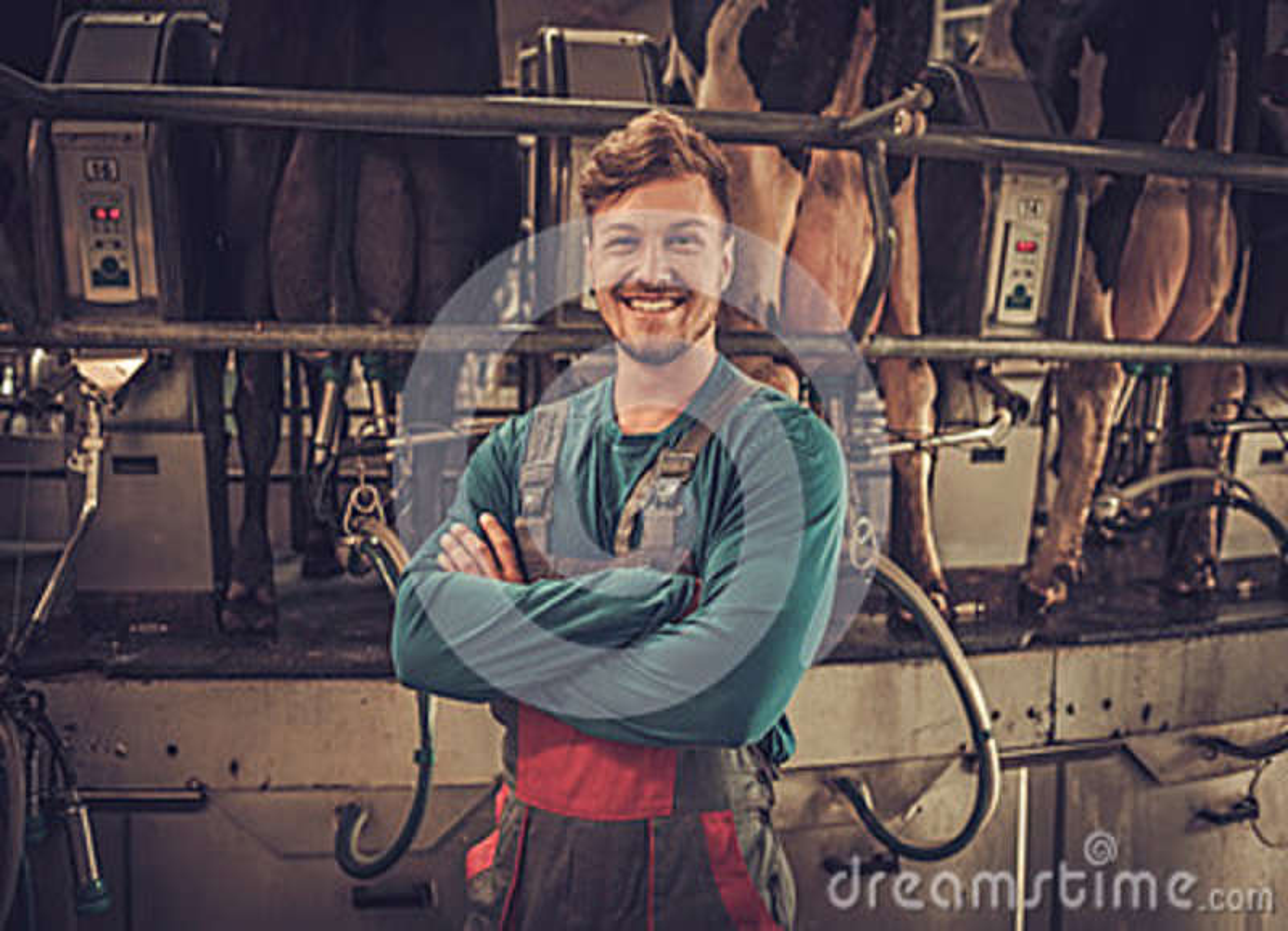 Mucche di mungitura amichevoli dell agricoltore all azienda lattiera