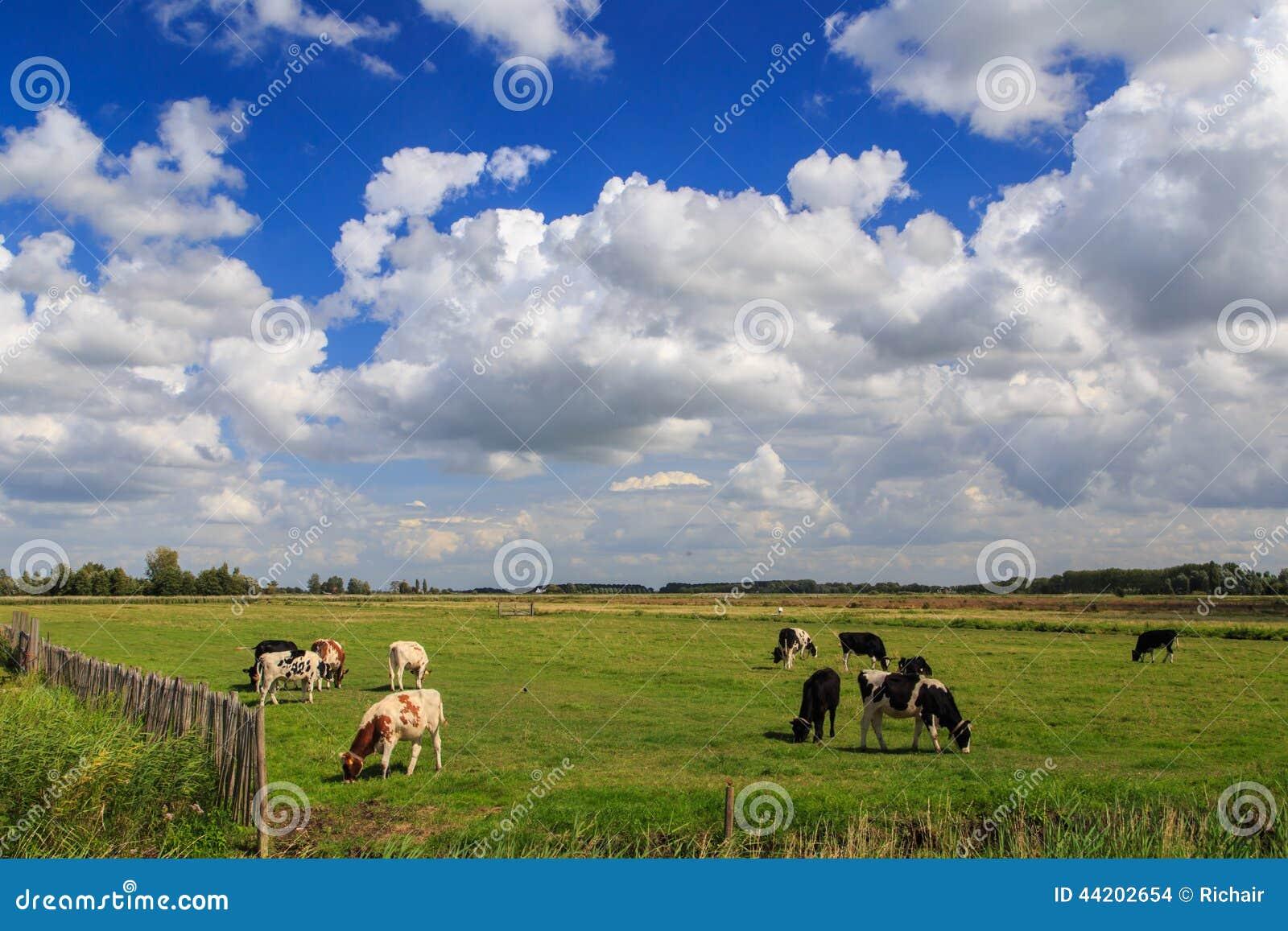Mucche e nuvole