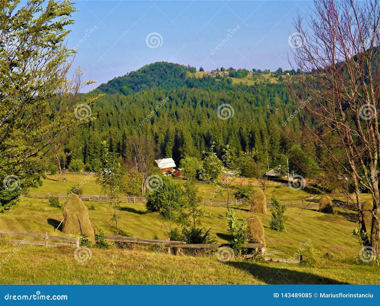 Mucchi di fieno nell area storica della Transilvania del ‹del †del ‹del â€