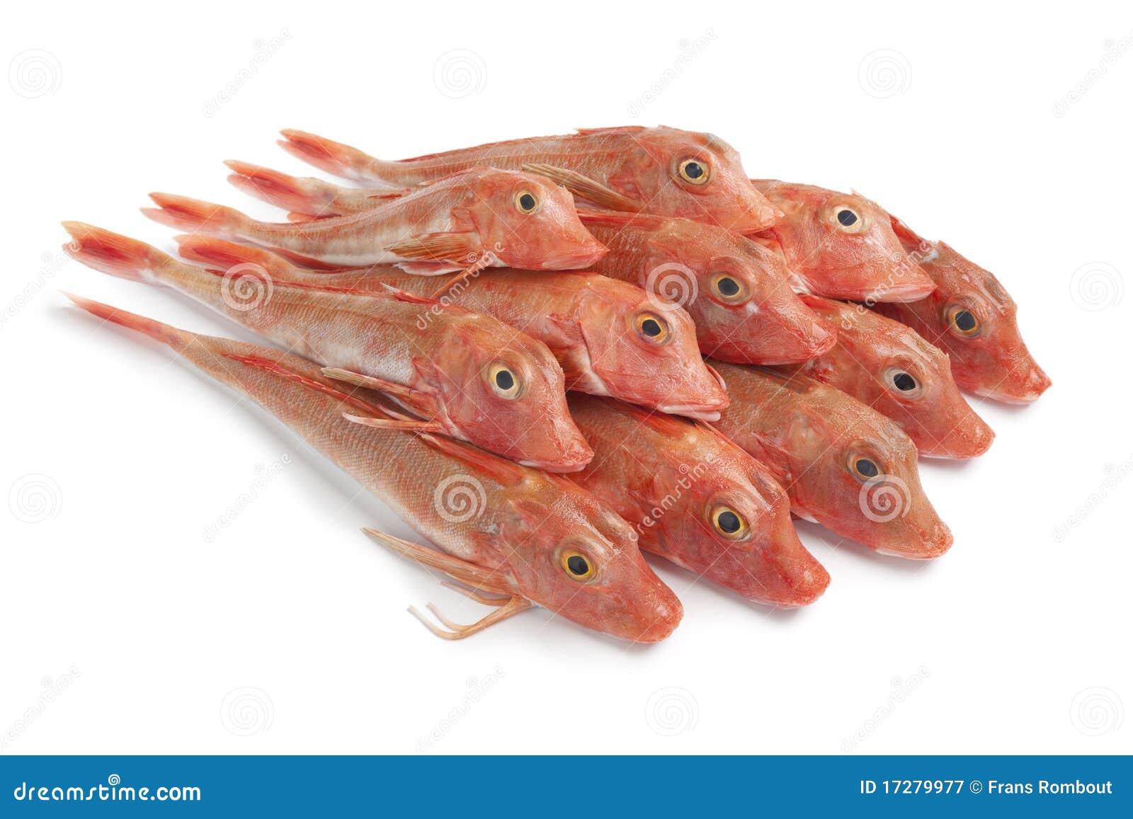 Mucchio dei pesci rossi del capone di vasca immagine stock for Vasca x pesci rossi