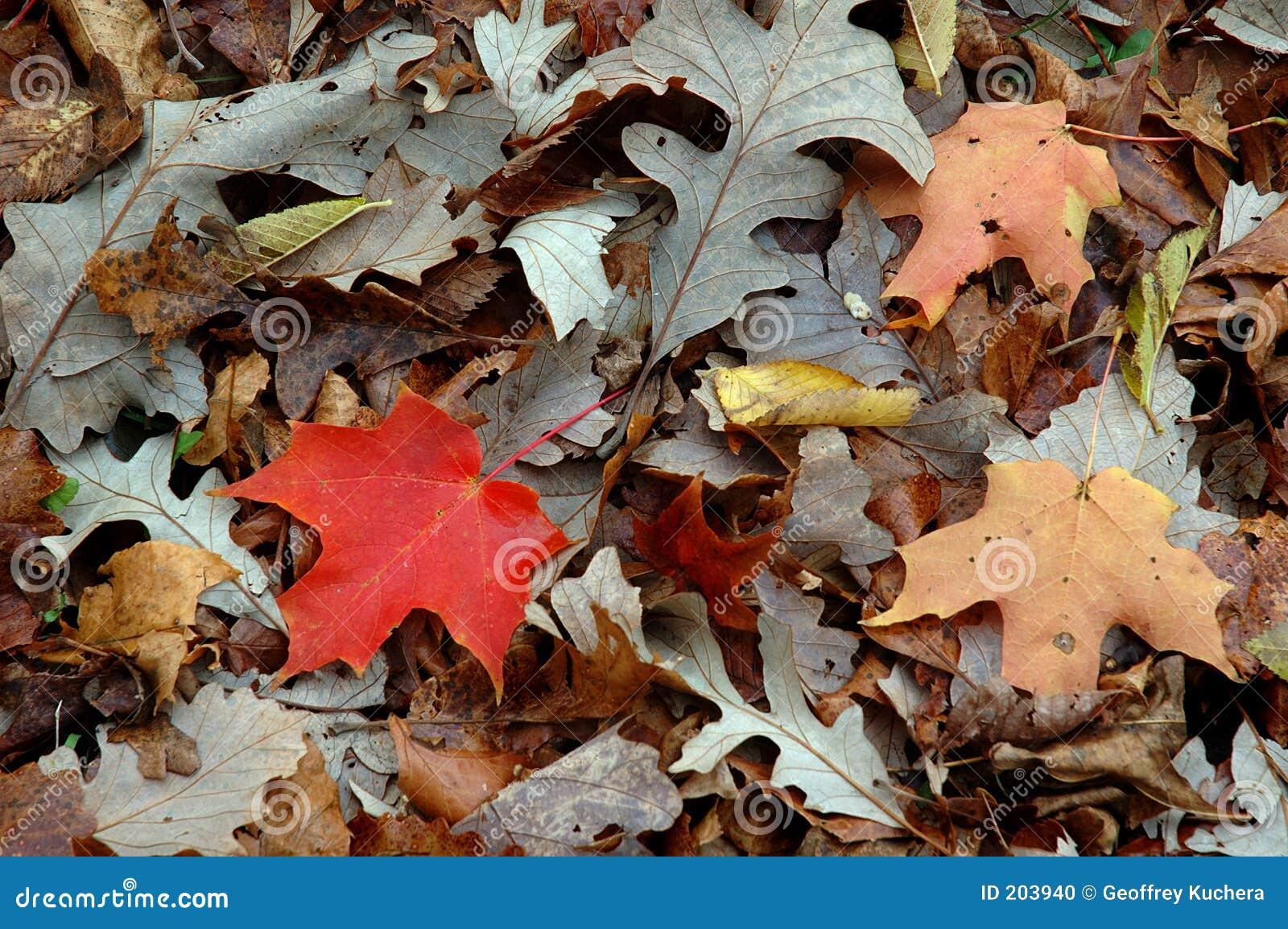 Mucchio del foglio di autunno