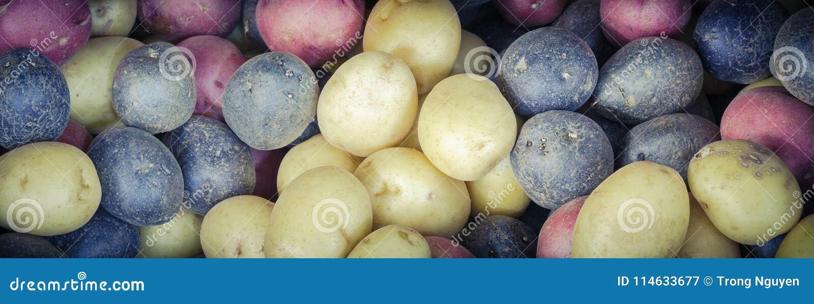 Mucchio del fondo misto organico delle patate dell arcobaleno di miscuglio