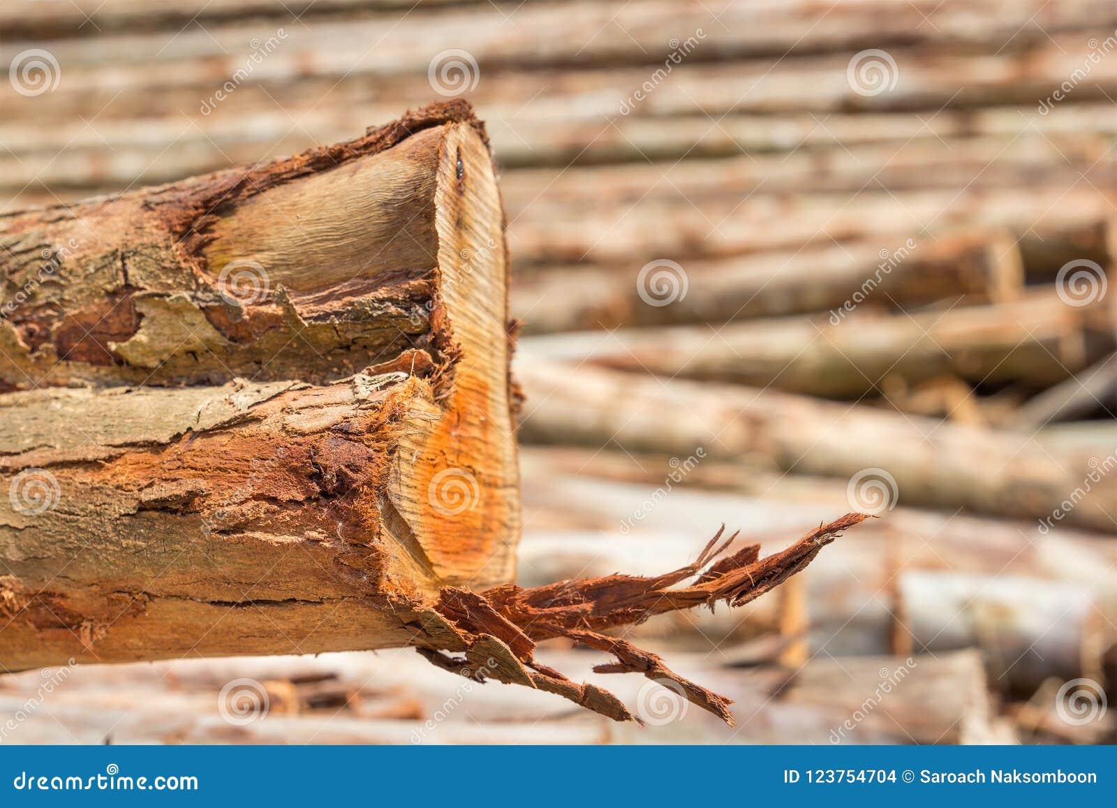 Mucchio del taglio dei tronchi di albero
