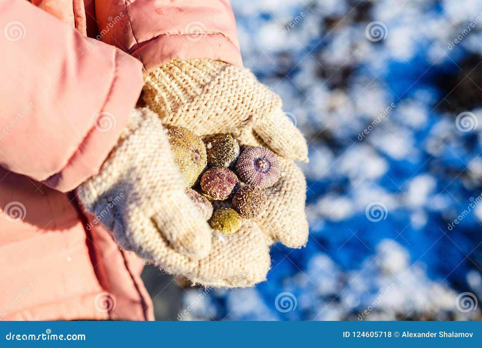 Muchacha que lleva a cabo cáscaras congeladas del mar