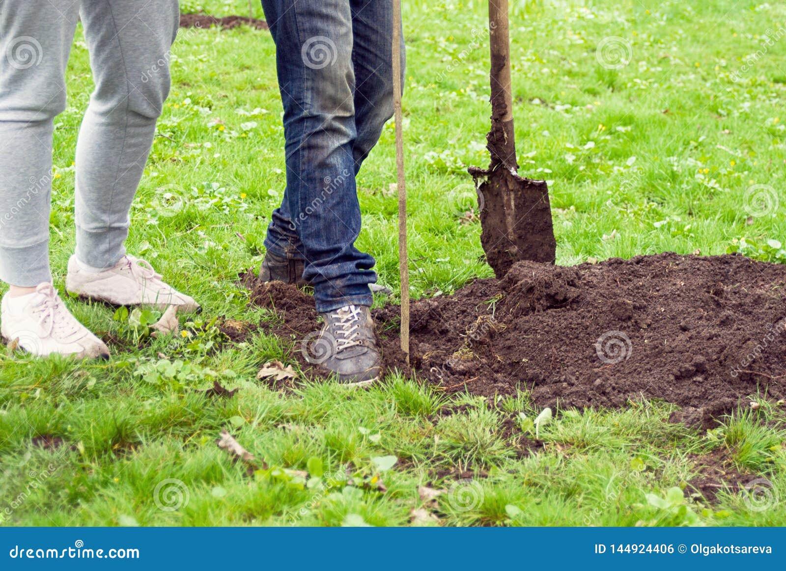 Muchacha y muchacho con una pala que plantan un árbol joven en el parque en el fondo de la hierba