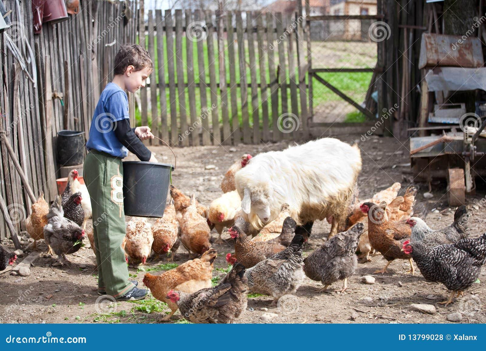 Muchacho de país que introduce los animales