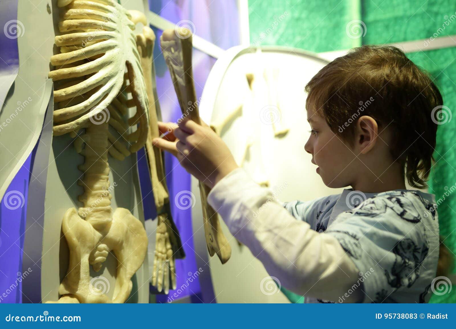 Muchacho Que Estudia La Anatomía Humana Imagen de archivo - Imagen ...