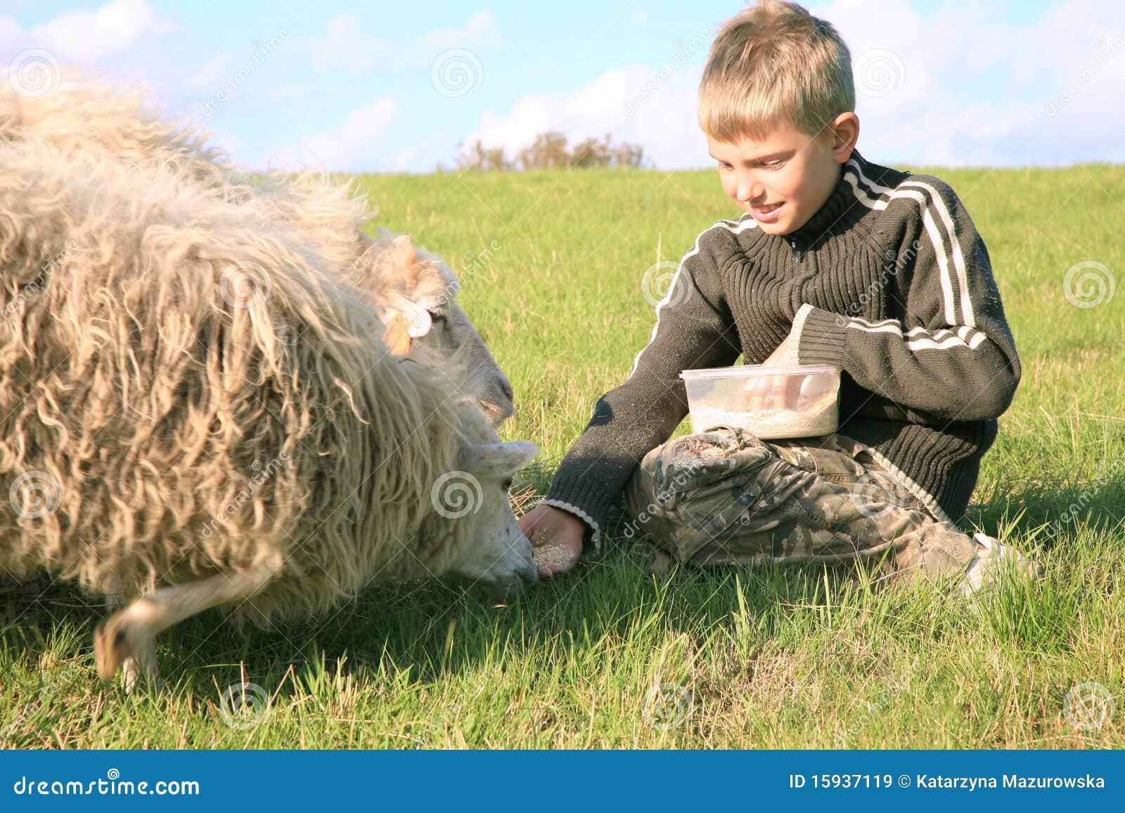 Muchacho y sheeps