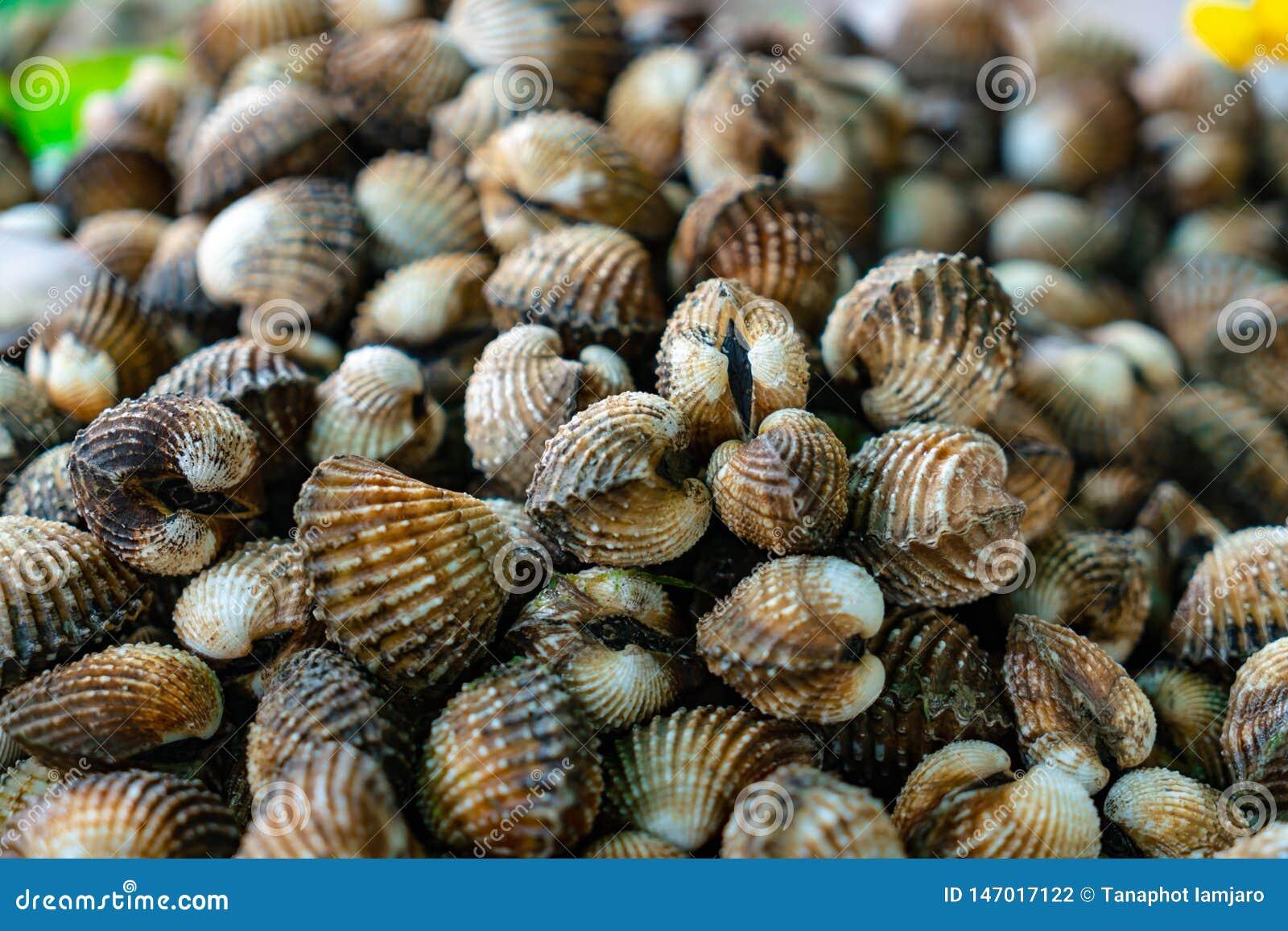 Muchos berberechos frescos limpios se apilan juntos y se hacen en los mariscos